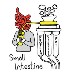 Metaphor function of small intestine to make vector