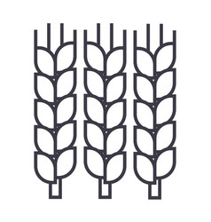 wheat line icon sign on vector image