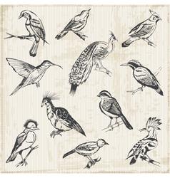 Hand drawn Birds vector image vector image