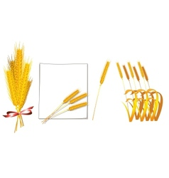 Bunch of wheat vector image vector image