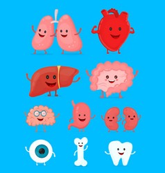 Cute smiling happy human healthy strong organs set vector
