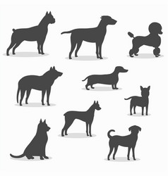dogs icons set of different breeds vector image vector image