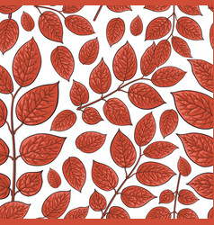 seamless pattern of birch honeysuckle red leaves vector image vector image