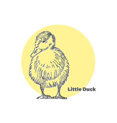 hand drawn sketch of little cute duck with vector image