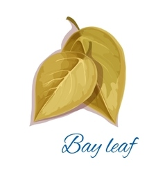 Bay leaf isolated icon with text vector