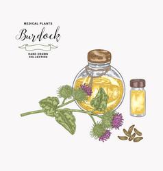 burdock plant hand drawn burdock flowers and vector image