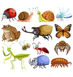 Different kinds of bugs vector