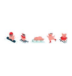 funny cartoon pigs winter sport activities vector image