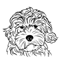 portrait a dog portrait breed golden vector image