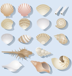Sea shell objects set vector