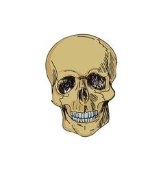 doodle skull vector image