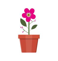 flower plant in flower pot decoration home plant vector image vector image