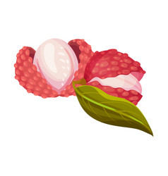 Lychee fruit with sweet flesh in rough red skin vector