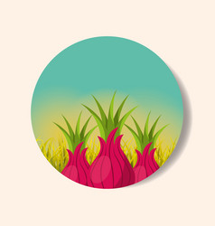 Plantation vegetable harvesting onion vector
