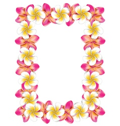 White and pink frangipani flowers frame vector