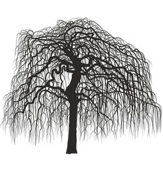 Mulberry tree without leaves vector