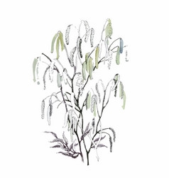 Silver birch catkin isolated on a white background vector