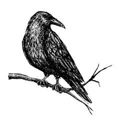 Vintage raven Hand drawn vector