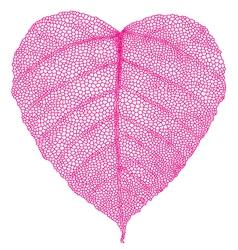 red heart skeleton leaf vector image