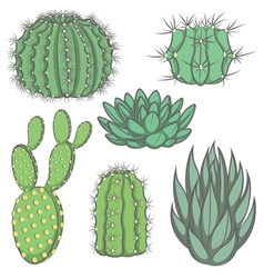 set of isolated colored cactus vector image