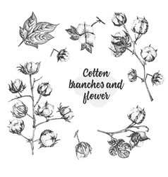 Set twigs flowers and leaves a cotton plant vector
