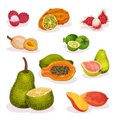 detailed flat set of various exotic fruits vector image