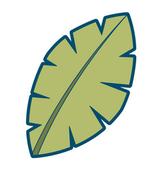 Leaf palm tree foliage natural image vector