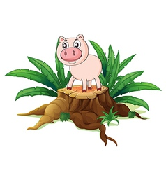 A pig above a trunk vector image