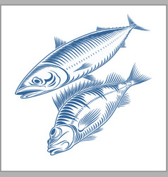 Fish set - sea bass mackerel vector