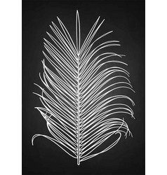 Graphic palm leaf vector