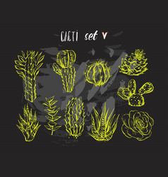 hand drawn graphic creative succulent vector image