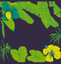 Hand drawn of tropical plants banana leaves and vector