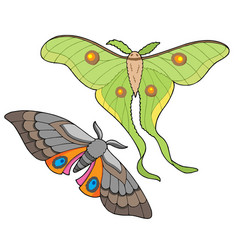 Night butterfly collection vector
