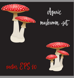 set of three fly agaric mushrooms isolated vector image