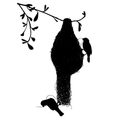 Weaverbirds silhouette vector image