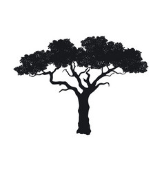 black silhouette african tree isolated image vector image