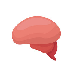 brian organ human mind healthy vector image