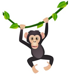 chimpanzee cartoon vector image