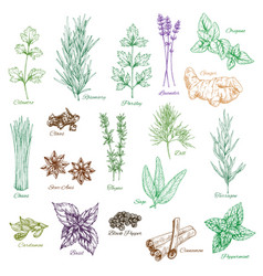 Icons set spices and herbs seasonings vector