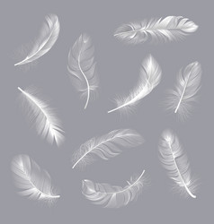 realistic feathers fluffy white twirled feathers vector image