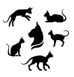 Sphynx cat icons and silhouettes vector