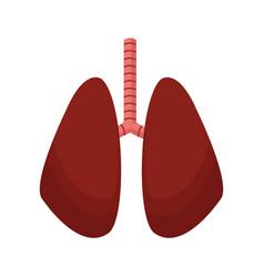 lung human anatomical health image vector image