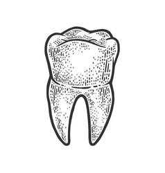 Human tooth sketch vector