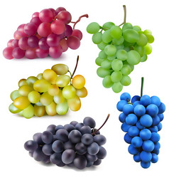 Red white green blue and dark blue grapes vector