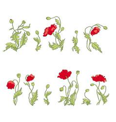 set of poppy flowers vector image