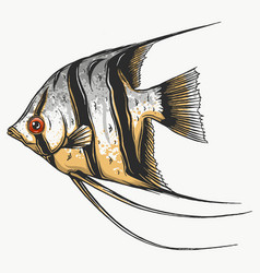 black scalar fish on white background vector image