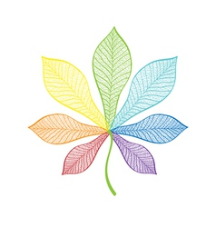 Chestnut leaf rainbow vector