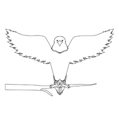 Contour eagle on a tree branch vector