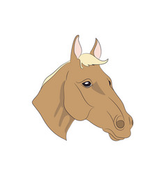 horse portrait vector image
