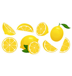 lemon slices fresh citrus half sliced lemons and vector image